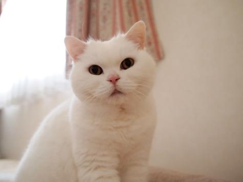 P5035222urabanashi.jpg