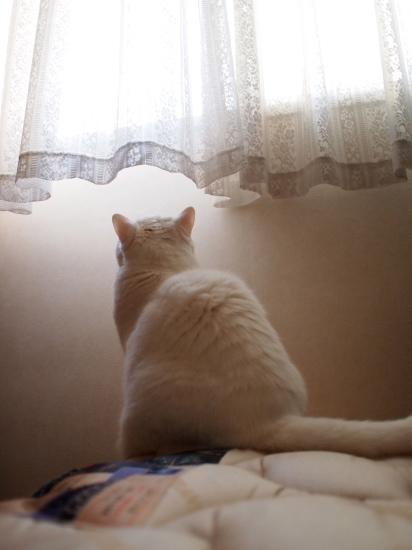 P5176015urabanashi.jpg