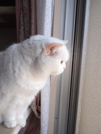 P5186041urabanashi.jpg