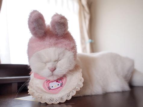 P5196239urabanashi.jpg