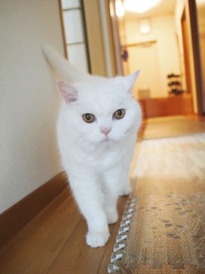 P6177306urabanashi.jpg
