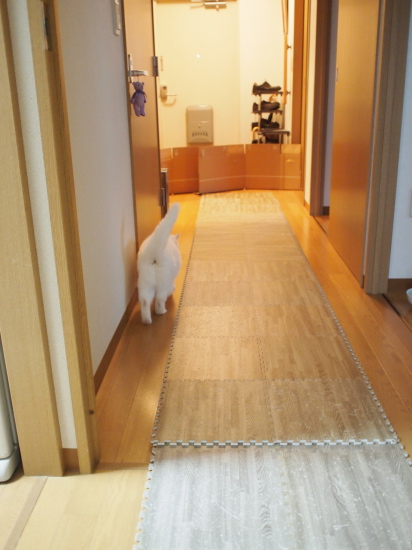 P6177308urabanashi.jpg