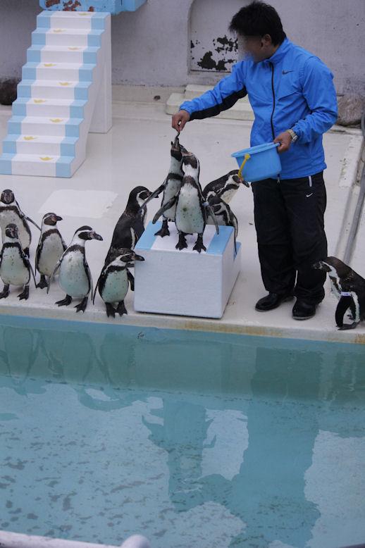 '13.4.19 penguin 8020
