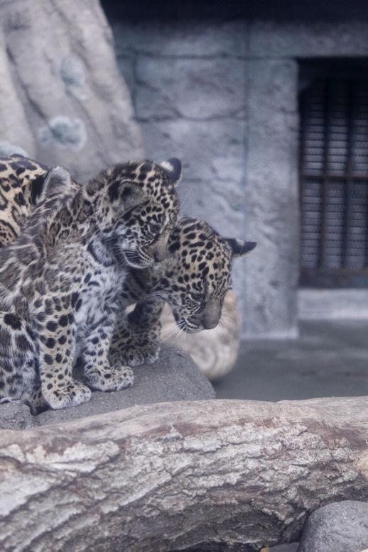 '14.10.17 jaguar 2820