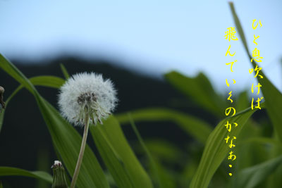 大原野花1