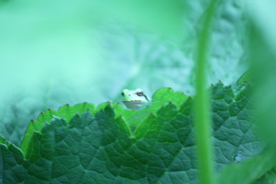 2012-07-23-白馬にて-004