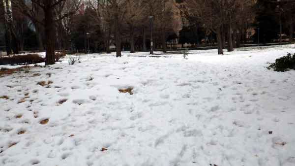 大雪から2日目、まだ雪はとけない