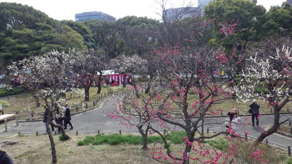 芝公園の梅屋敷(梅祭りの日)