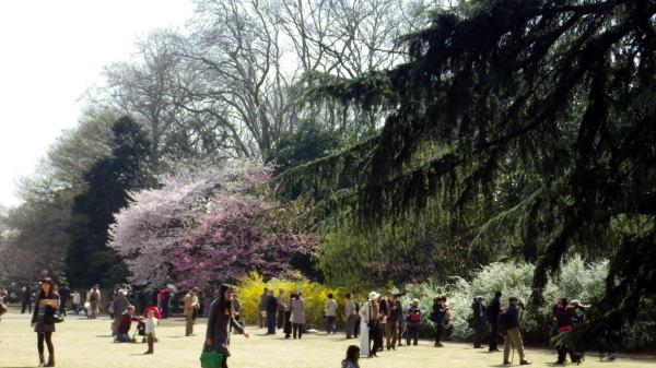 新宿御苑 色々な春