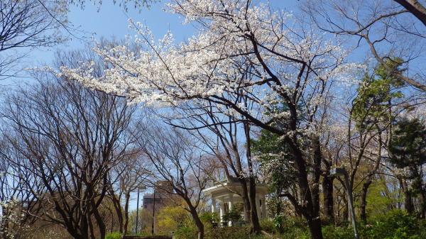 新宿中央公園 六角堂とサクラ