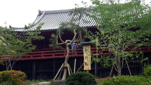上野 清水堂 月の松