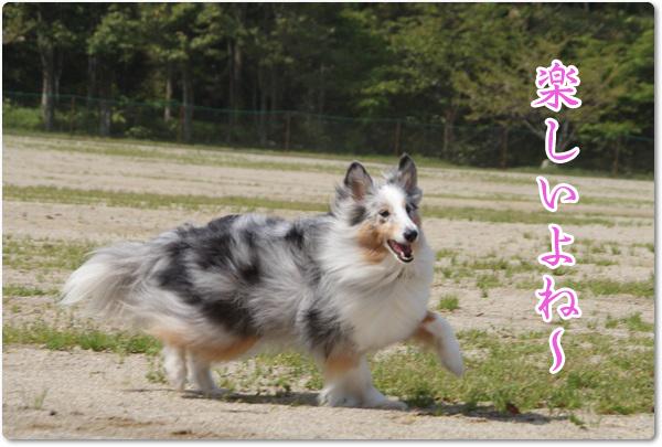 20130405_054.jpg