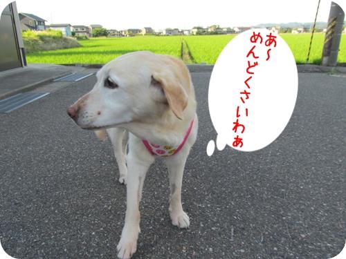 20130661.jpg