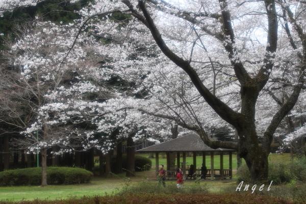 泉自然公園(201303249670)