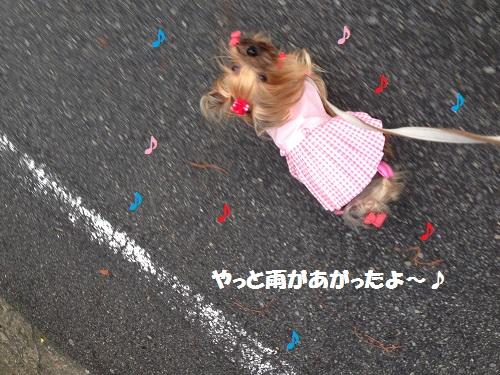 雨があがた