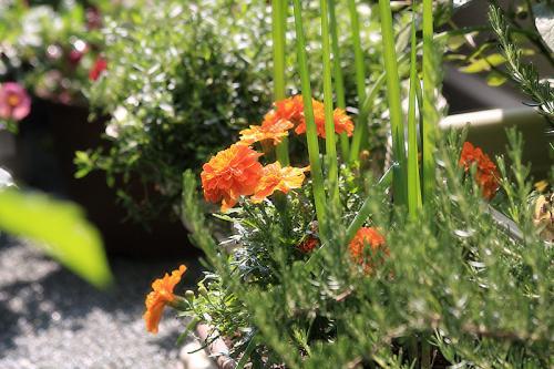 家庭菜園05