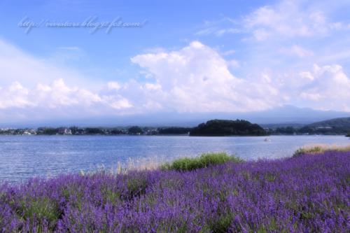 河口湖ハーブフェスティバル03