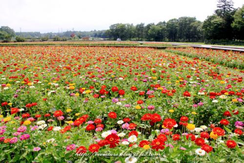 花の都公園01