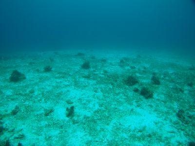 荒れたサンゴ