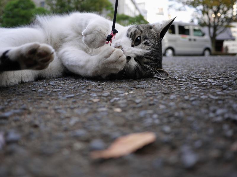 ネズミと遊ぶ友だち猫