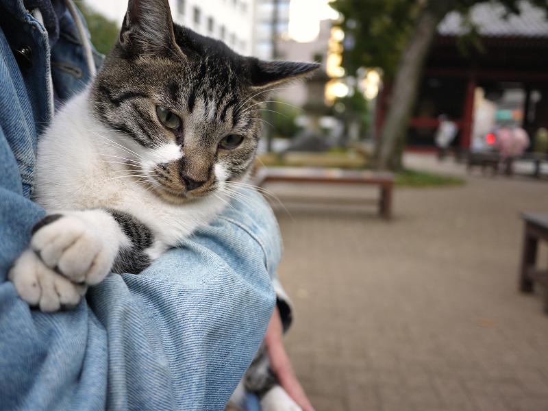 抱かれる友だち猫