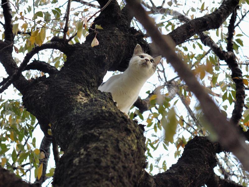 サクラの木に登った友だち猫2