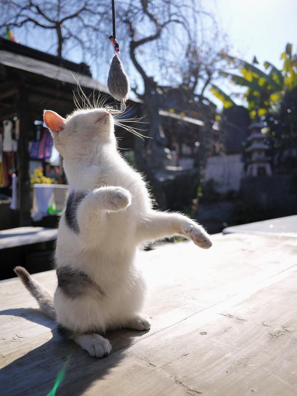 ネズミを見つめる仔猫1