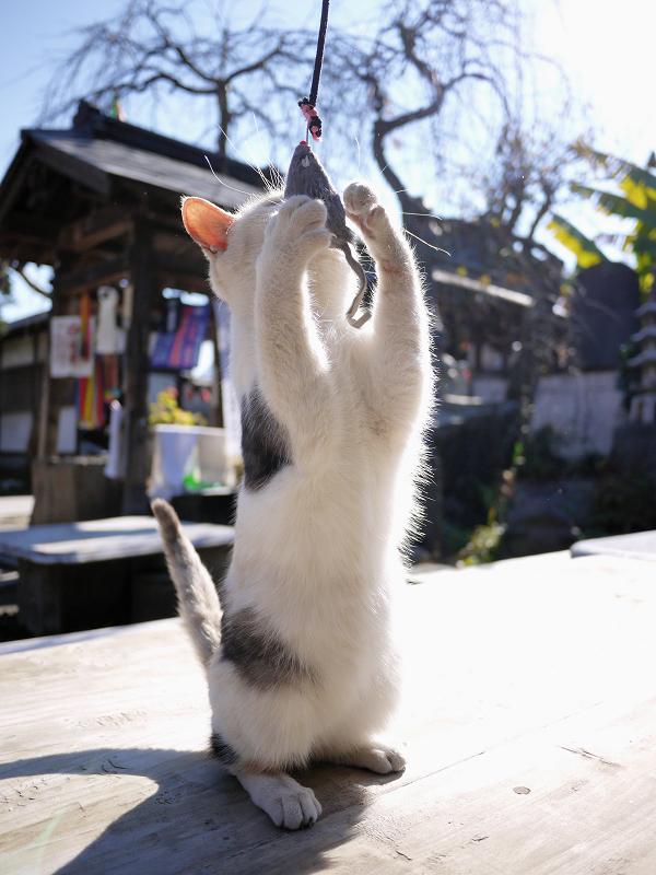 ネズミを見つめる仔猫2