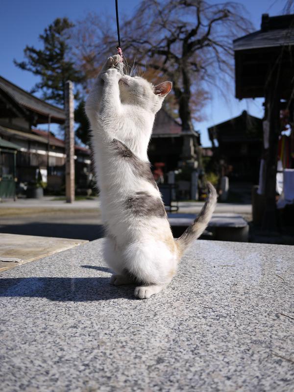 ネズミに飛びつくネコ