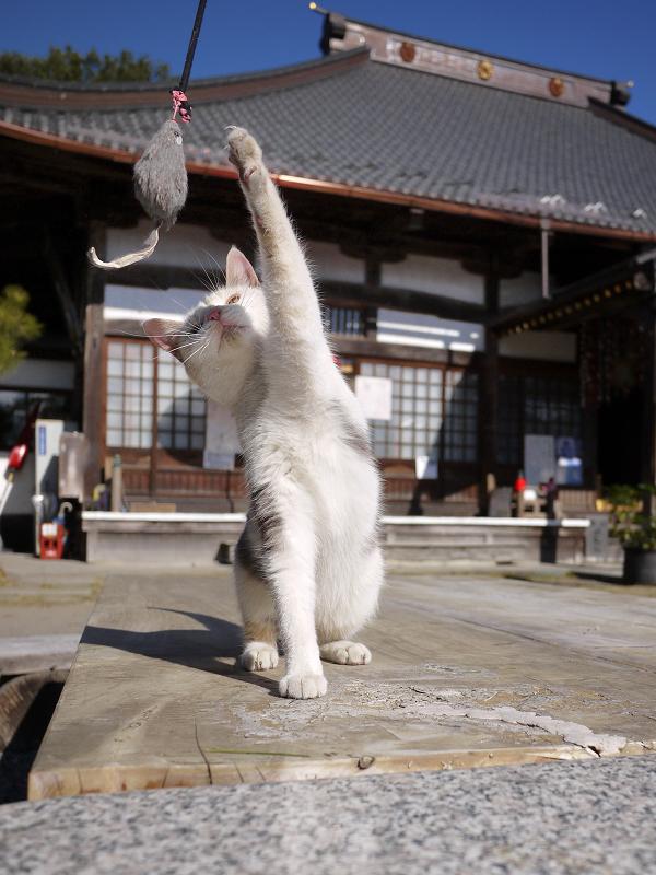 ネズミに片手を伸ばすネコ