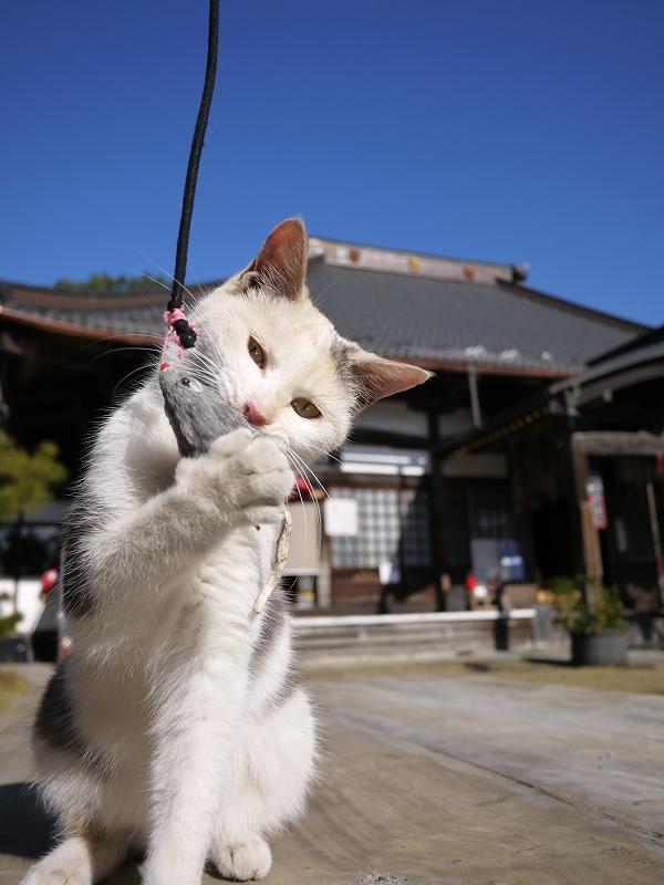 ネズミを捕まえたネコ11