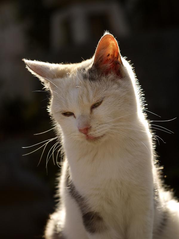 逆光のネコ2