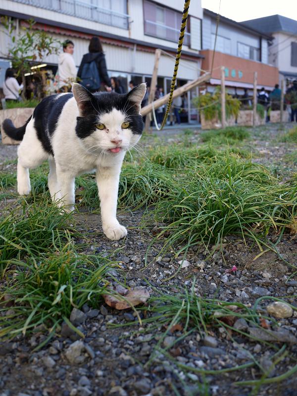 空き地を歩くネコ