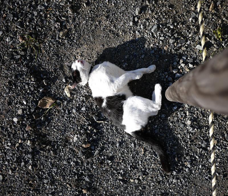 杭の横で転がるネコ