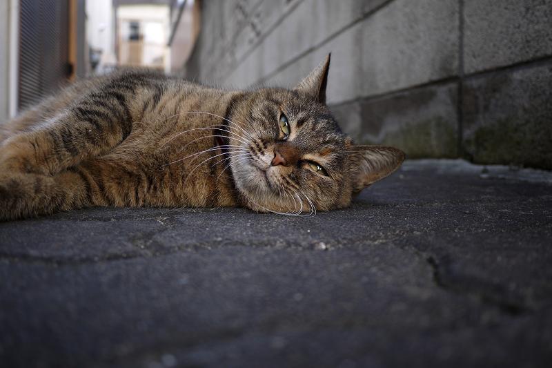 自宅前で横になってるネコ
