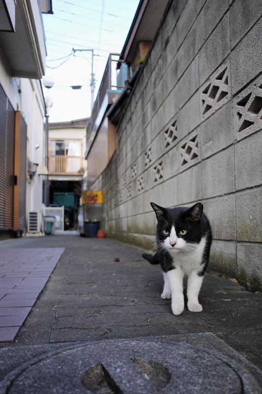玄関前に出てきたネコ