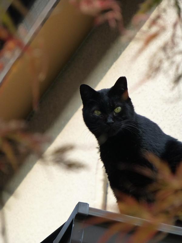 秋色と黒猫