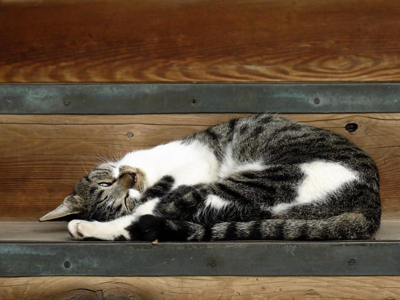 階段で寝てるネコ1