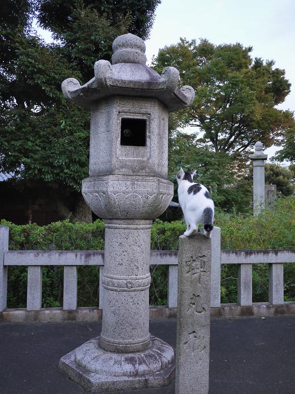 石灯籠に昇るネコ