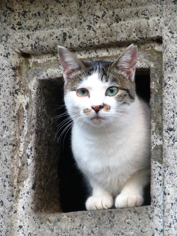 石灯籠から顔を出すネコ