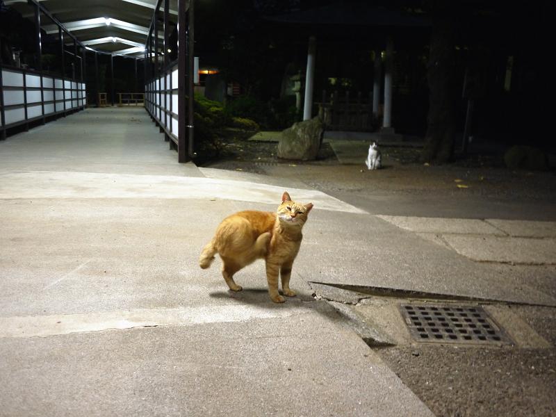 蛍光灯とネコ