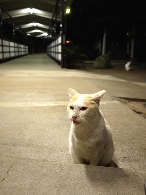夕暮れの足下ネコ