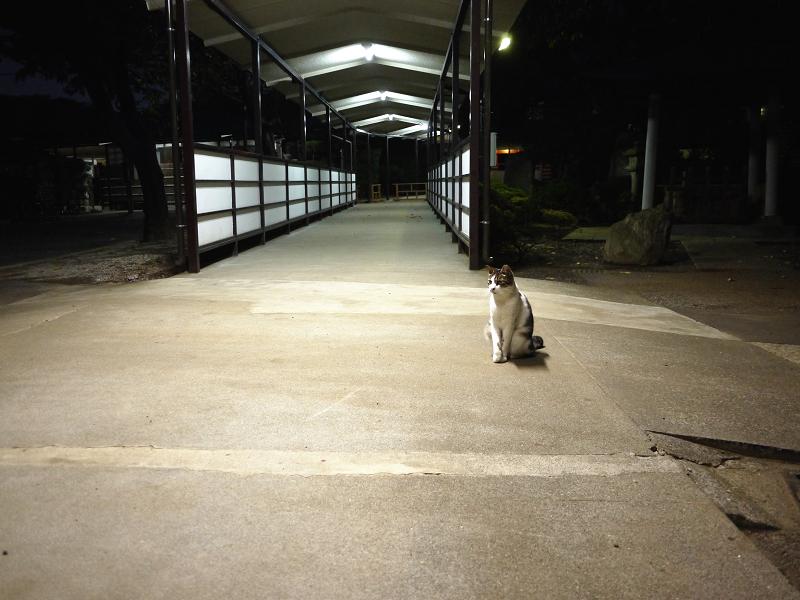 夕暮れの通路ネコ
