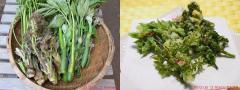 2012 05 12 今日の山菜と天婦羅