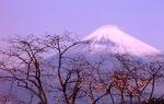 柿と富士山