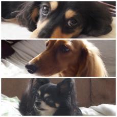 2013年賀犬