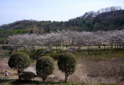 アコーディオンの練習~鏡山公園20130330-1