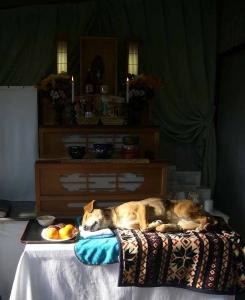 レジーナと広島ペット霊園へ20131229-1