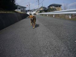 散歩20130323-3