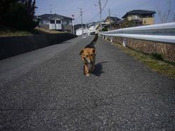 散歩20130324-2